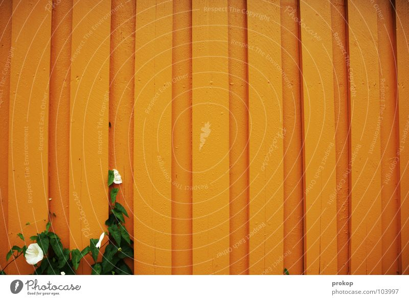 Beautiful Flower Plant Wall (building) Blossom Wood Orange Free Growth Trust Stripe Brave Few Seam Endurance Minimal