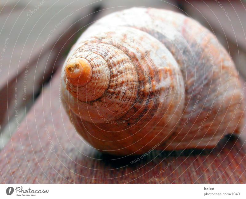 flotsam and jetsam Snail shell