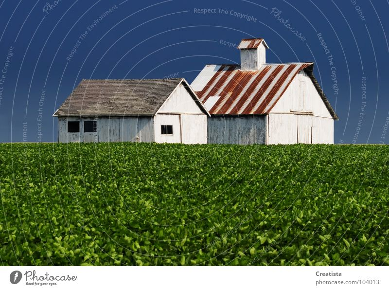 Rural Barns Wood flour Countries Sky Strong Nutrition Farm barn agriculture building crop leaf harvest horizon rural country grow distance whitewash exterior