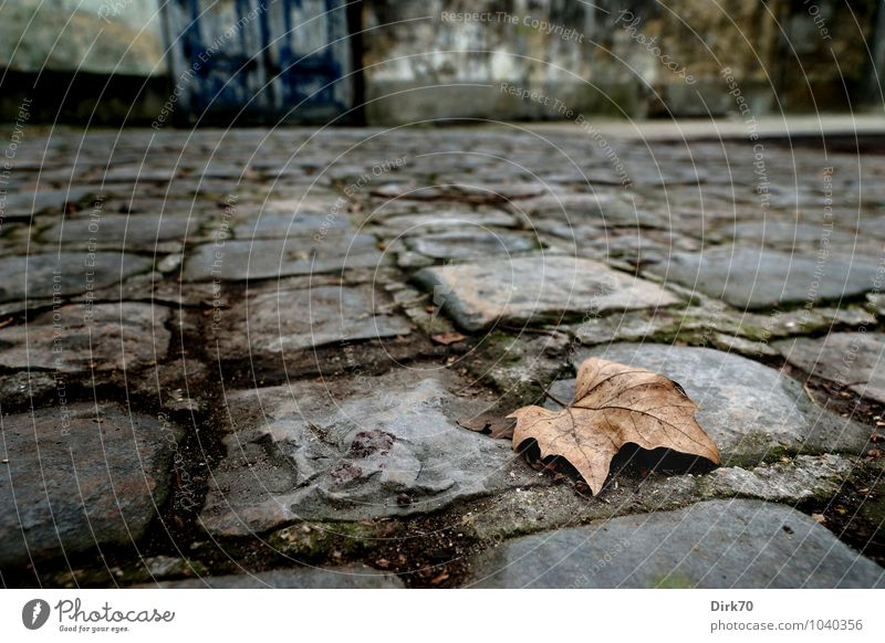 Nature Blue Leaf Environment Wall (building) Autumn Lanes & trails Wall (barrier) Gray Time Brown Dirty Gloomy Door Transience Broken