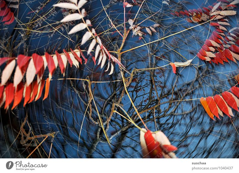 leaf series ... 4 Art Environment Nature Air Sky Autumn Gale Tree Leaf Exceptional Blue Red Surrealism Rotate Dynamics Twigs and branches Bright Colours