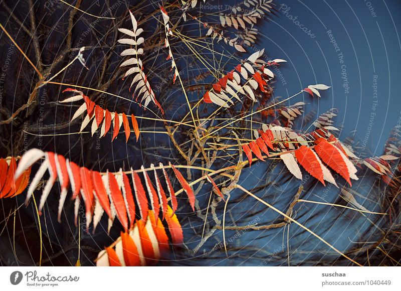 leaf series ... 5 Art Environment Nature Sky Autumn Gale Leaf Exceptional Exotic Wild Blue Red Surrealism Twigs and branches leaves Dark Colour photo