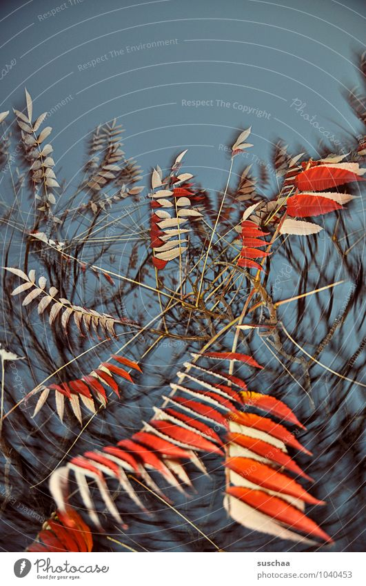 leaf series ... 6 Art Environment Nature Sky Autumn Tree Exceptional Wild Blue Red Surrealism Leaf Twigs and branches Rotation Colour photo Multicoloured
