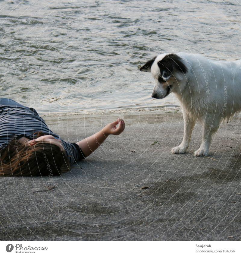 Water White Dog Beach Gray Coast Stone Waves Concrete River To feed Pet Caution Feeding Feed Pebble