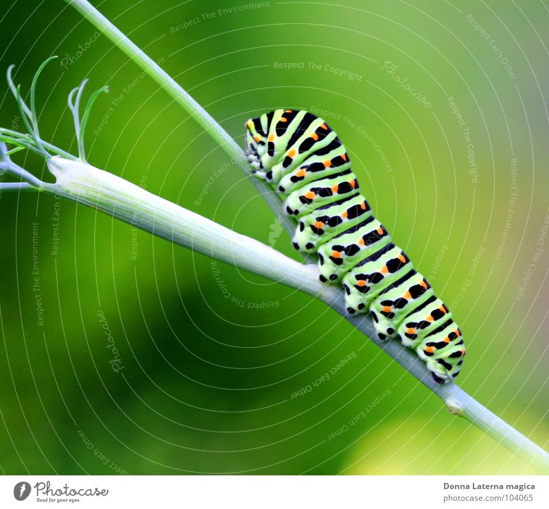 Beautiful Green Black Nutrition Lamp Garden Orange Wait Small Bushes Branch Butterfly Presentation Slowly Caterpillar
