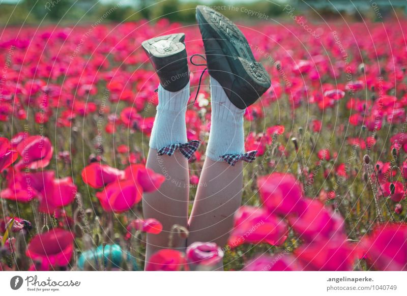 when all of a sudden the world's pink. Poppy Field Meadow Pink Blossom Flower Nature Legs Footwear Bow Joy Exuberance Summer Girl Valentine's Day
