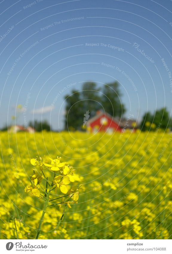 blue, green, red and yellow II Canola Scandinavia Finland House (Residential Structure) Field Vacation & Travel Farm Canola field Summer Summer vacation Horizon