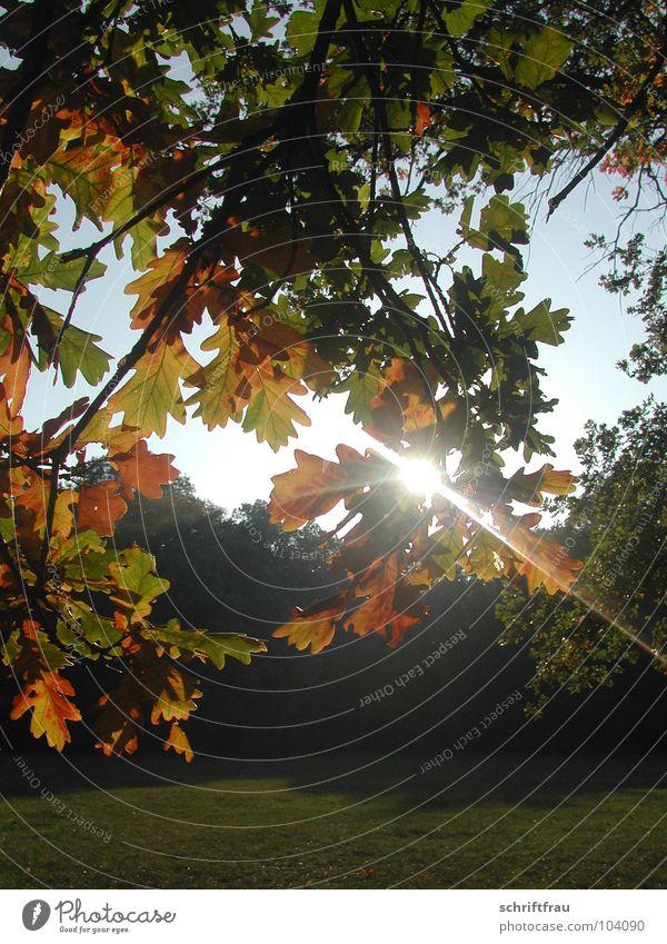 Sky Tree Sun Leaf Autumn Park Romance Beam of light