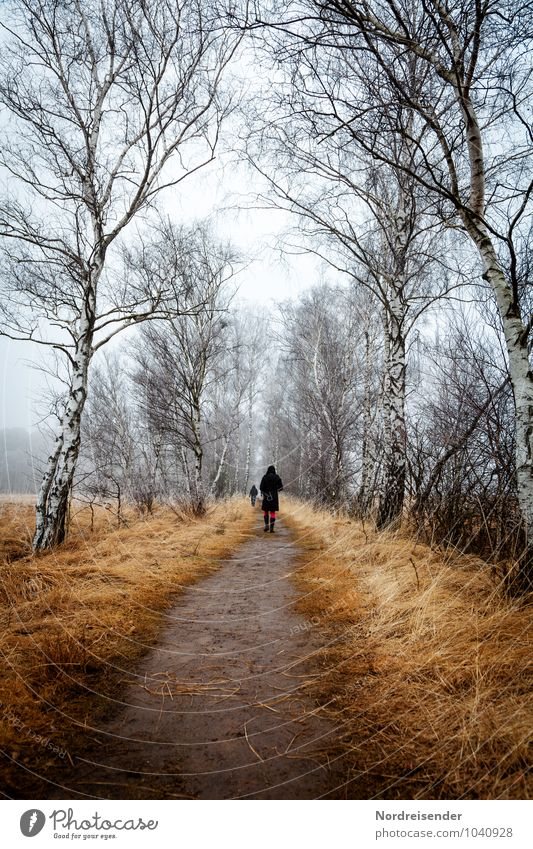 Human being Nature Blue White Tree Relaxation Loneliness Landscape Winter Autumn Meadow Grass Lanes & trails Natural Ice Leisure and hobbies