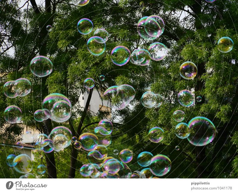 bubbles Tree Soap bubble Movement Catch Flying Playing Dream Fluid Free Happiness Glittering Positive Round Multicoloured Green Joy Joie de vivre (Vitality)