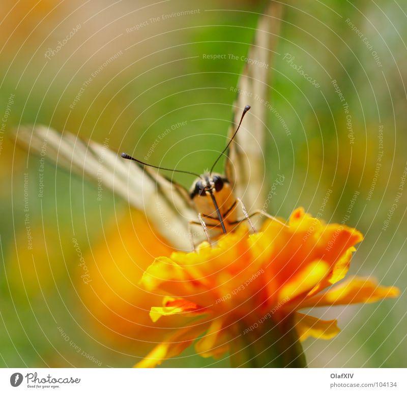 Nature White Flower Summer Joy Calm Eyes Yellow Feet Orange Sit Flying Sweet Wing Stripe Peace