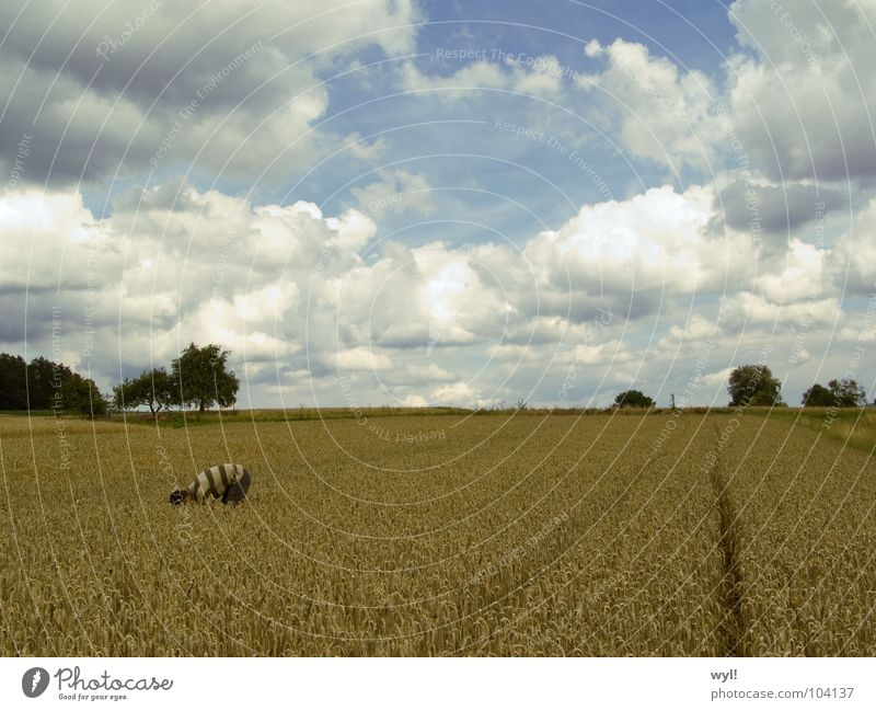 Sky White Blue Clouds Field Art Horizon Circle Tracks Grain Wheat Tractor Intersection Barley Arts and crafts  Rye