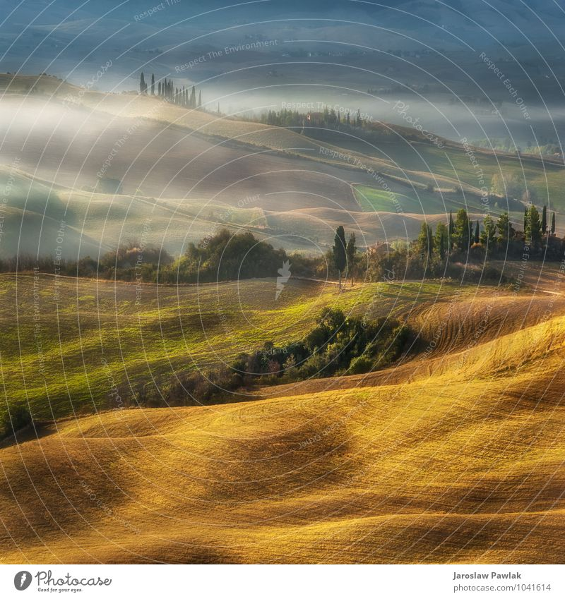 .... morning on the hill in Tuscany Nature Vacation & Travel Green Tree Landscape House (Residential Structure) Environment Autumn Spring Fog Tourism