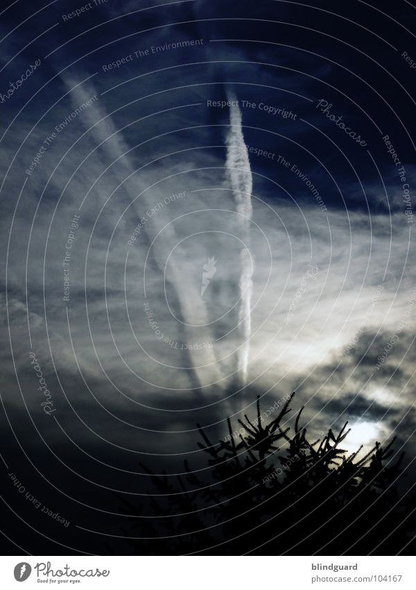Sky Tree Blue Summer Black Clouds Dark Sadness Fear Threat Stripe Fir tree Thunder and lightning Storm Panic Eerie