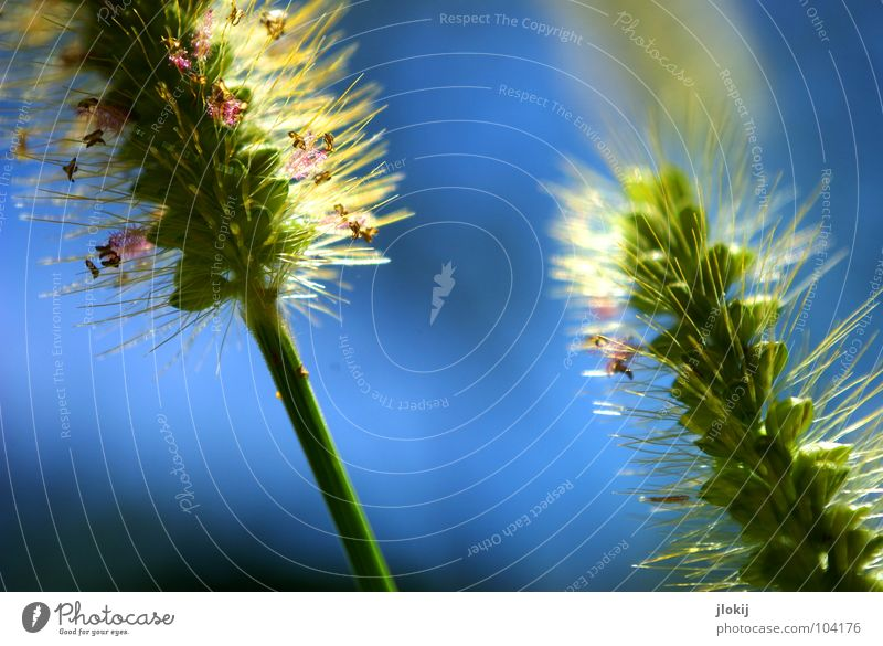 Nature Green Blue Plant Summer Life Meadow Jump Blossom Grass Spring Wind Growth Blossoming Stalk Blade of grass