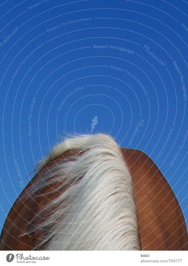 Sky Blue Summer Mountain Snow Happy Brown Blonde Back Horse Neck Mammal Bangs Blue sky Mane Mountain ridge