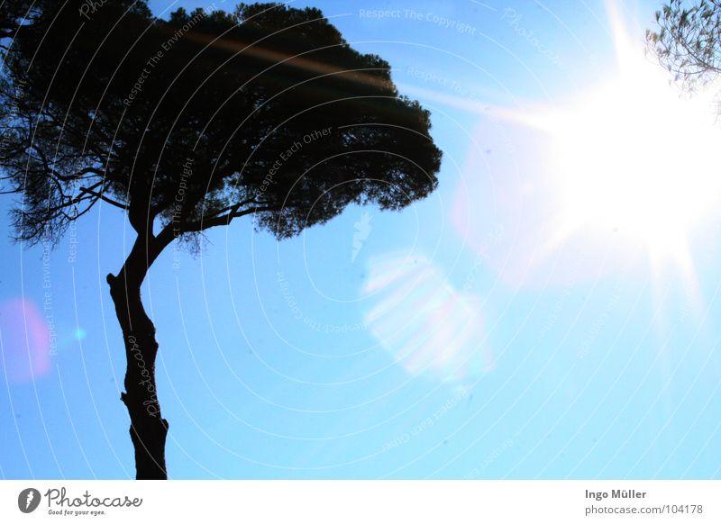 Italy at 30 °C Naples Foreign countries Europe Tree Palm tree Light Sunbeam Summer Beach Dazzle Americas Beam of light Sky