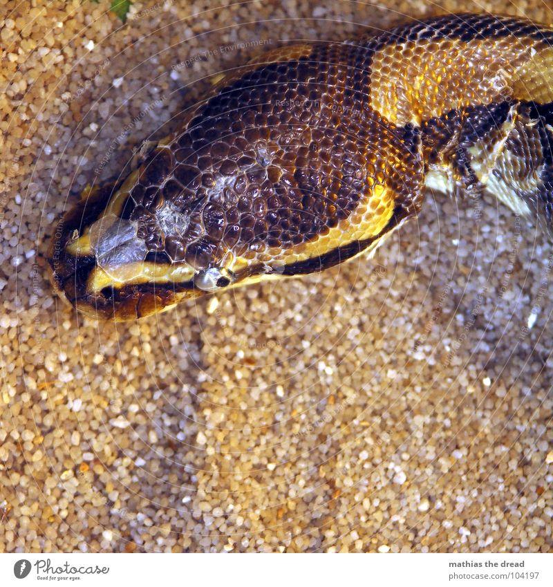 Black Animal Life Dark Sand Dye Brown Fear Skin Force Dangerous Threat Hide Zoo Noble Panic