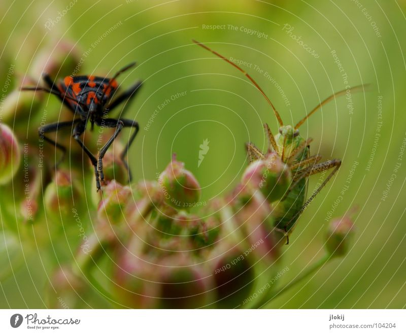 Nature Red Summer Blossom Grass Legs Background picture Insect Meeting Blossoming Seed Agree Beetle Feeler Hop Crawl