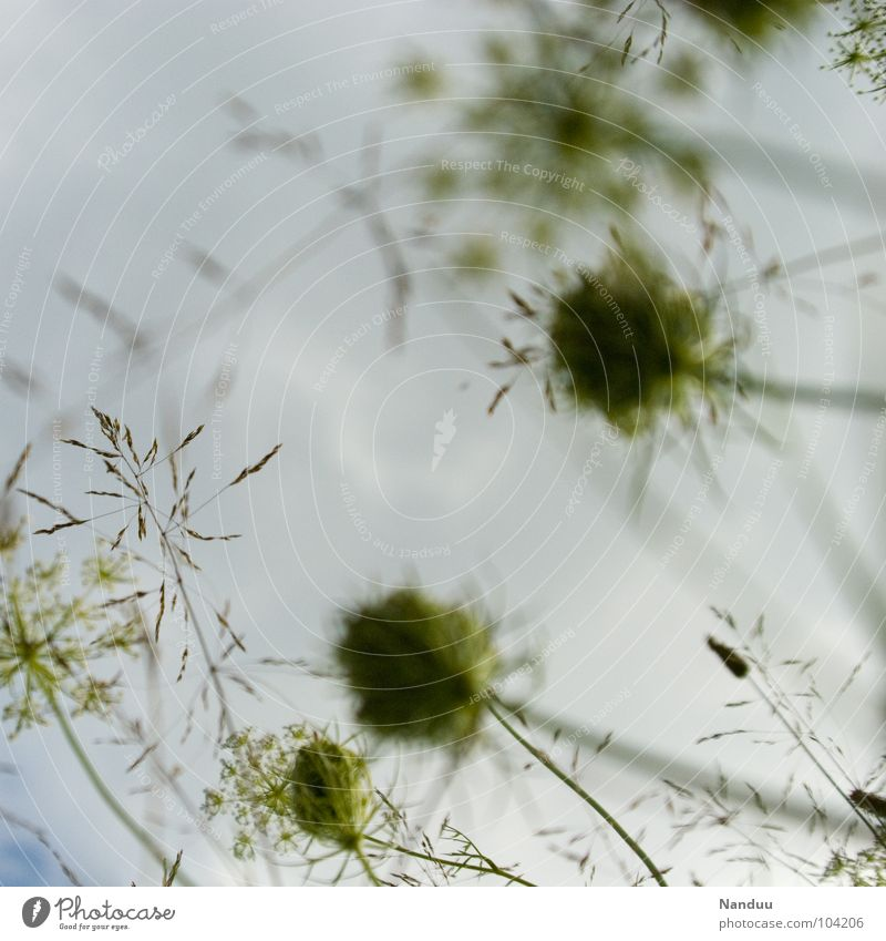 green to white Meadow Foliage plant Grass Flower Clouds Bad weather Blur Worm's-eye view Autumn Sky Cover Seed