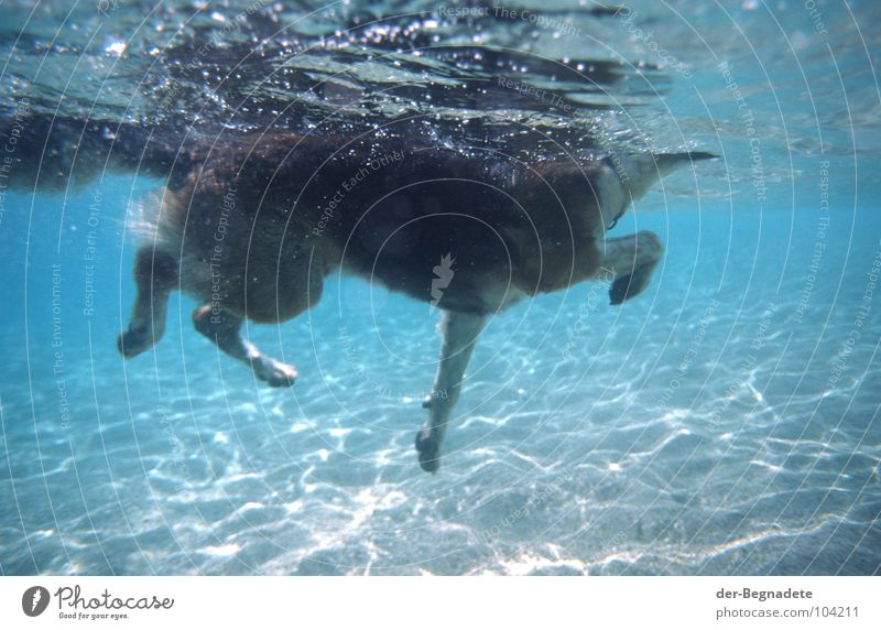 Water Blue Summer Joy Vacation & Travel Animal Playing Dog Warmth Sand Fear Wet Dangerous Threat Dive Swimming & Bathing