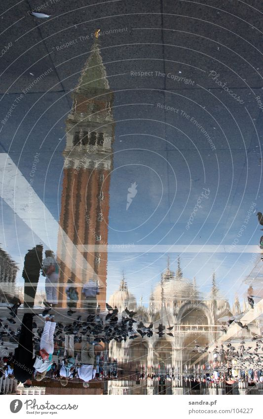 Mirrored World II Venice Basilica San Marco Places Pigeon Inverted Reflection House of worship Traffic infrastructure Italy Water Tower Religion and faith Dome