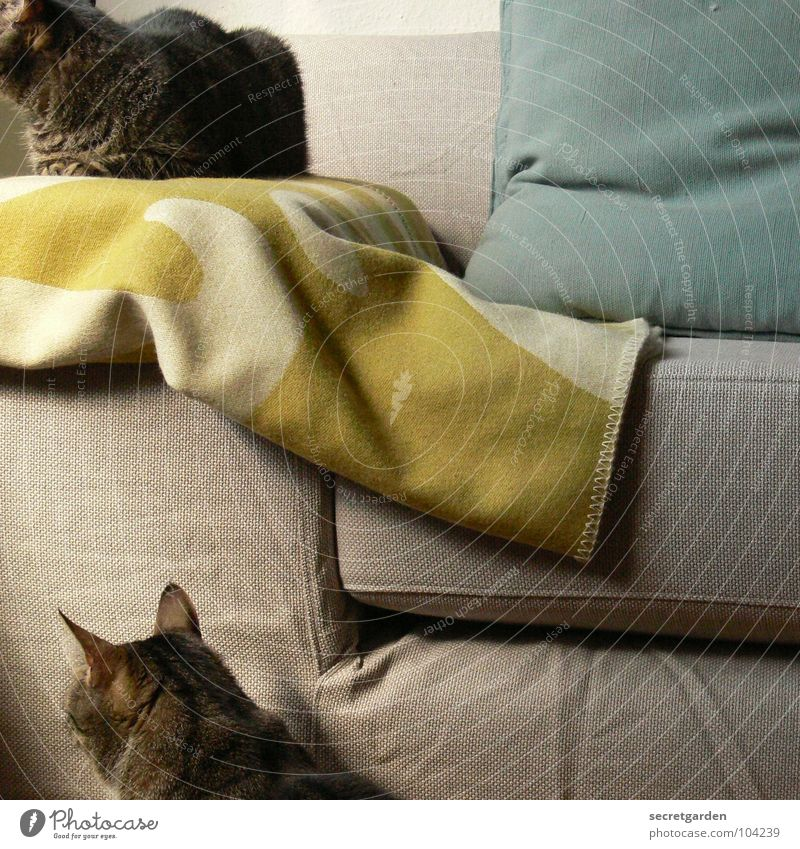 in one direction Sofa Cat Hang Striped Cloth Green Bilious green Wool Physics Covering Cuddly Cuddling Gray Cozy Slouch Television Material Living room