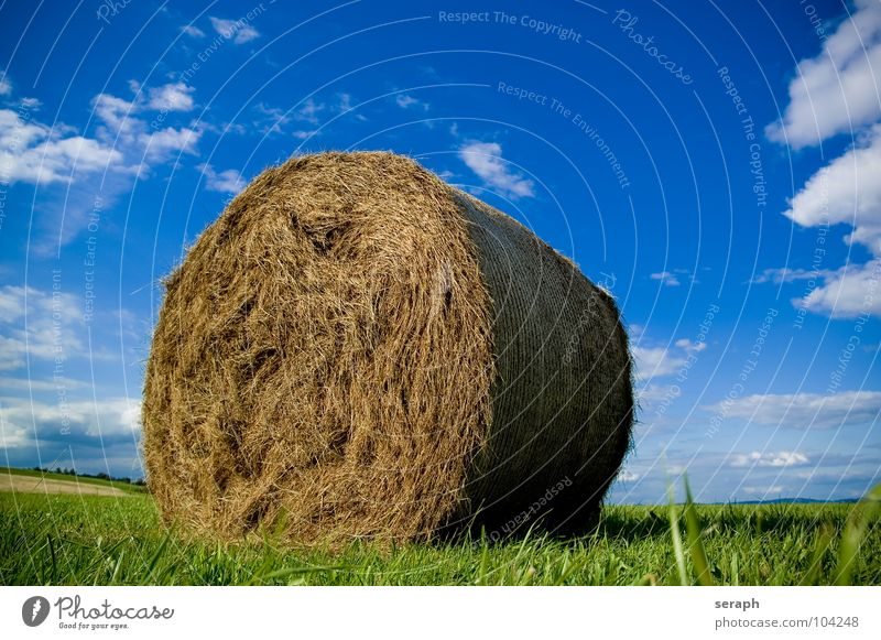 Bale of Straw Hay Bale of straw Hay bale Coil Roll Field Meadow Sky Summer Agriculture Feed forage plant Grass Blade of grass Harvest import Grain Packaged