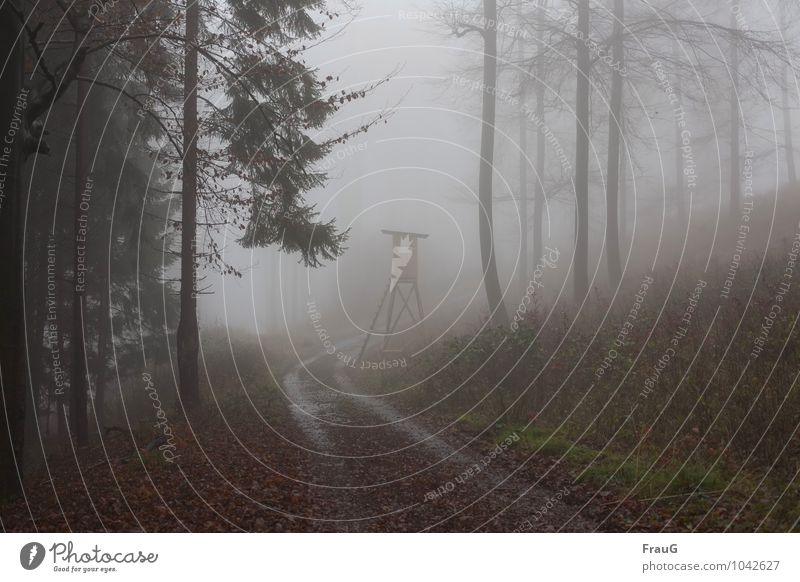 poor prospects Hunting Autumn Fog Forest Lanes & trails Hunting Blind Wet Nature Curve Dreary Exterior shot Day