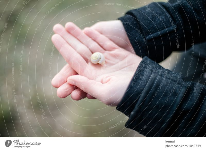 All the small things (5) Lifestyle Hand Fingers Palm of the hand 1 Human being Coat Snail shell To hold on Small Cute Beautiful Black Contentment Calm Indicate