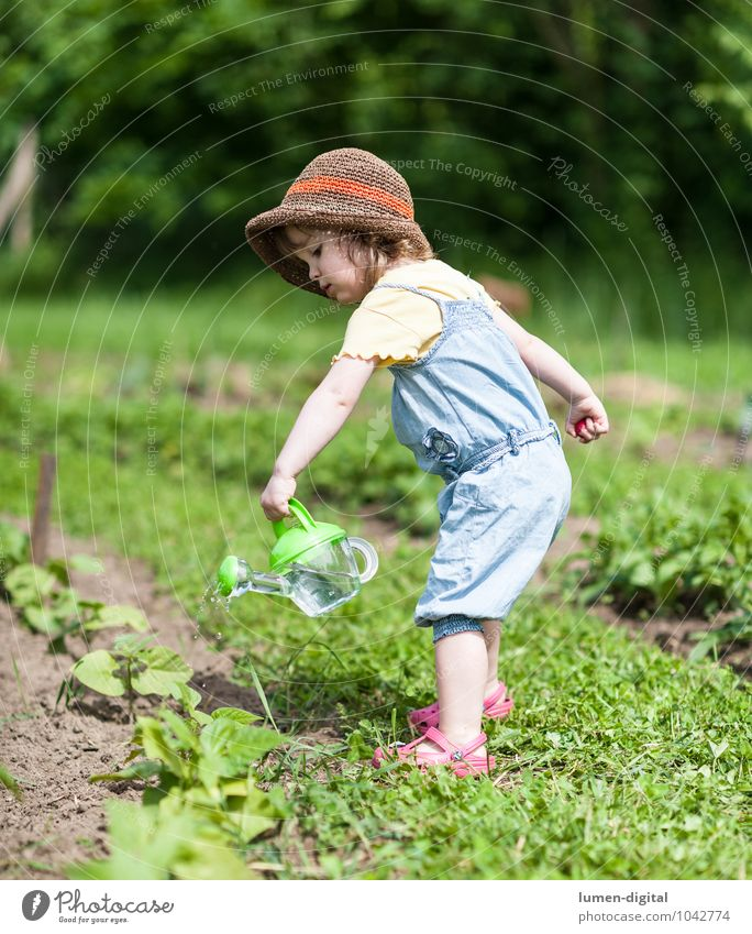 Little girl watering plants Vegetable Summer Garden Child Gardening Toddler Field Hat Watering can Work and employment Relaxation Healthy Bright Green Happy