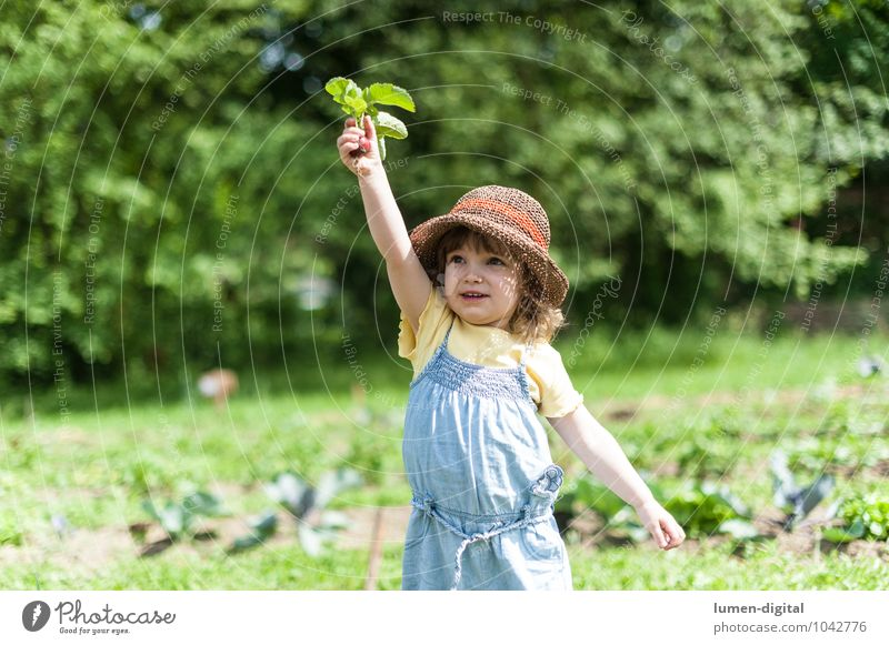 Child holding up radishes Vegetable Joy Summer Garden Gardening Human being Toddler 1 1 - 3 years Field Hat Laughter Stand Beautiful Cute Happiness