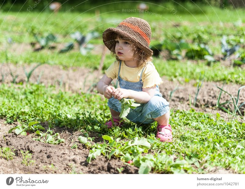 Girls in the field Vegetable Joy Summer Garden Child Gardening Toddler Field Hat Crouch Laughter Extend Garden Bed (Horticulture) Harvest Vegetable bed