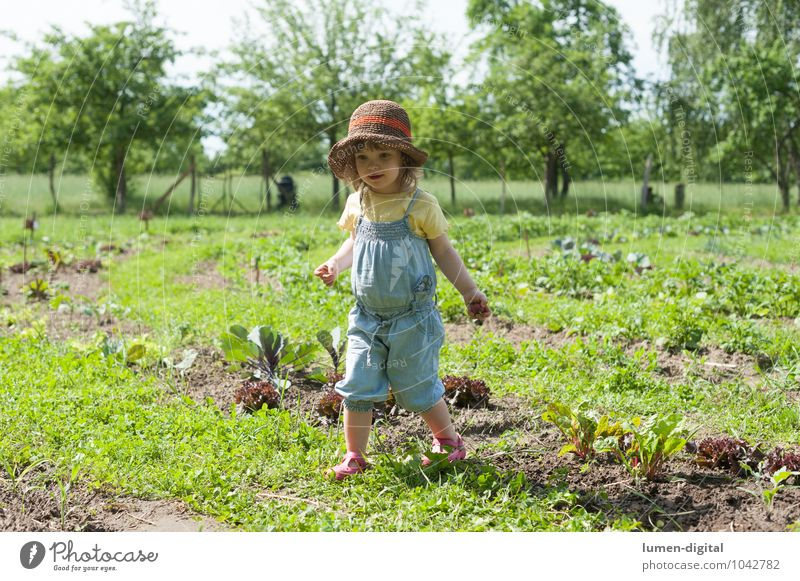 Child Summer Tree Joy Girl Laughter Garden Field Infancy Vegetable Harvest Hat Toddler Garden Bed (Horticulture) Gardening Country life