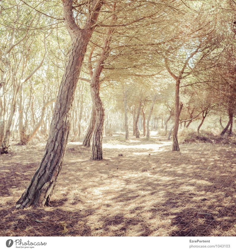 Nature Vacation & Travel Plant Colour Summer Sun Tree Landscape Forest Environment Yellow Warmth Natural Wood Line Brown