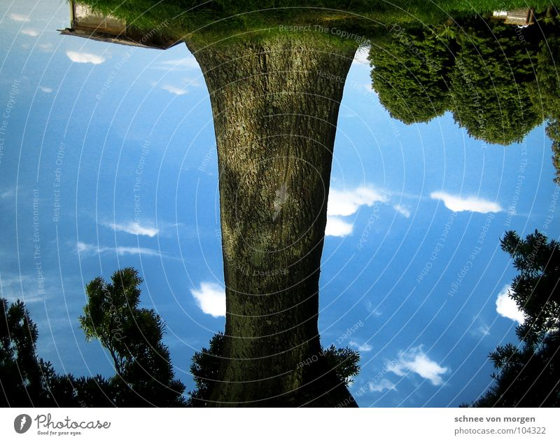 Sky Tree Blue Summer Joy House (Residential Structure) Clouds Grass Bushes Idyll Rotate False Go crazy Green pastures