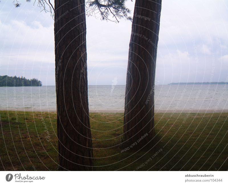 Trees and Mee(h)r Ocean Lake Meadow Dusk Bad weather Fog Water gloom