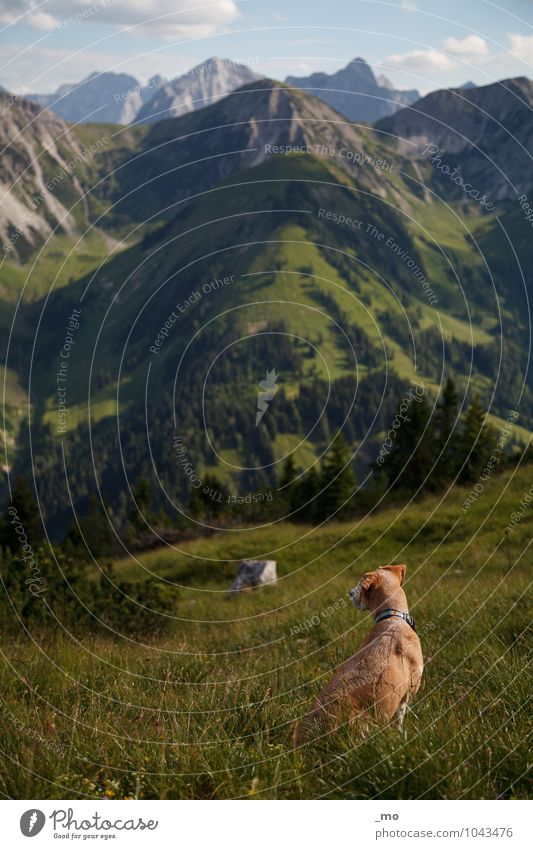 on the way Trip Adventure Freedom Mountain Hiking Nature Landscape Summer Hill Rock Alps Peak Animal Pet Dog 1 Sit Far-off places Infinity Natural Above Green