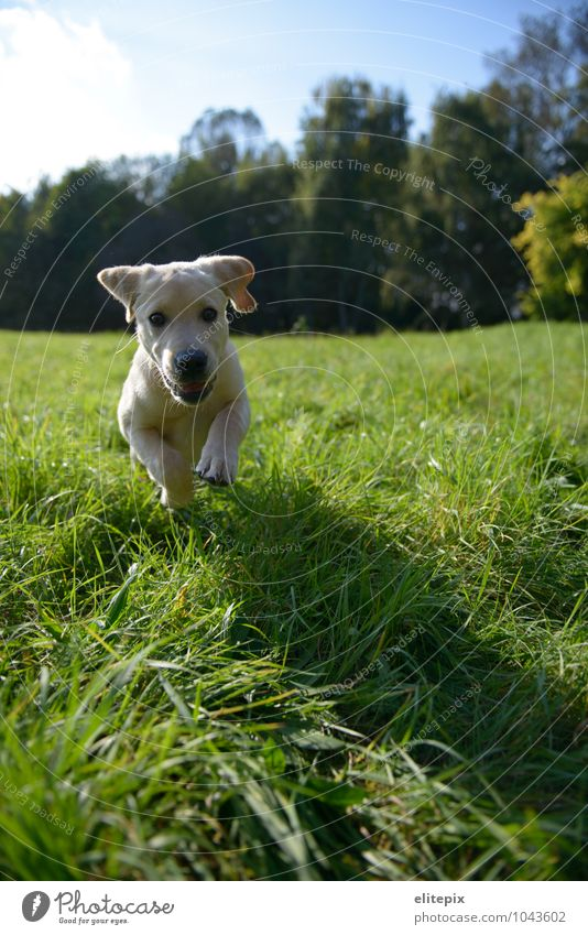 Dog Nature Green Summer Relaxation Animal Autumn Meadow Grass Natural Happiness Joie de vivre (Vitality) Beautiful weather Running Hunting Pet