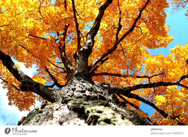 colourfulness Environment Nature Plant Sky Cloudless sky Sun Summer Autumn Climate Beautiful weather Tree Garden Park Forest Esthetic Elegant Exotic Healthy