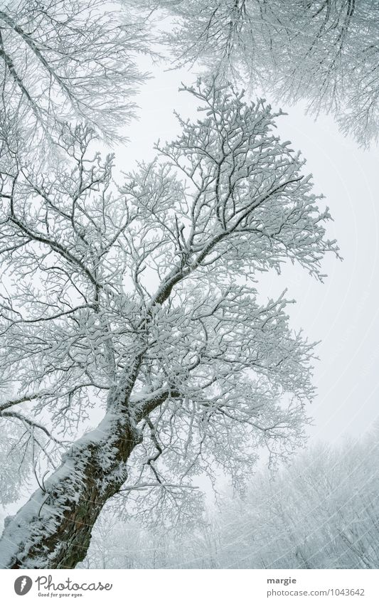 Filigree tree Environment Nature Plant Animal Water Winter Climate Weather Ice Frost Snow Snowfall Tree Branch Tree trunk Treetop Twigs and branches Forest