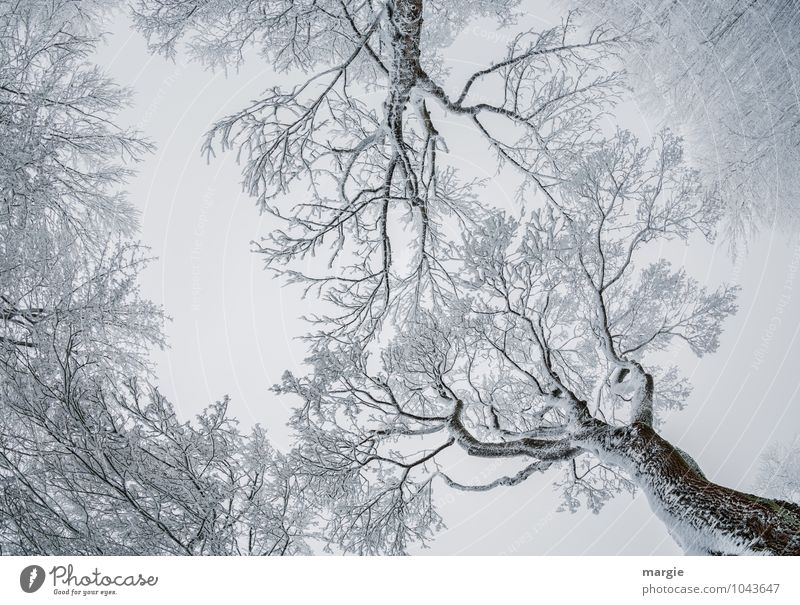 Filigree works of art, frozen snow - trees Environment Nature Sky Winter Climate Weather Ice Frost Snow Snowfall Tree Twigs and branches Tree trunk Forest