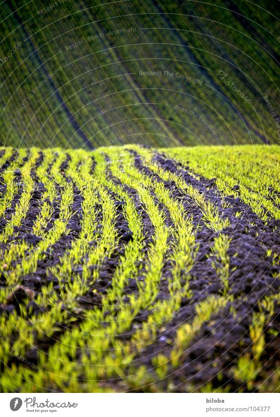 The fields are sprouting again Field Grain Sprout Plantlet Agriculture Sowing Occur green Fresh Life Product Waves Pattern Structures and shapes