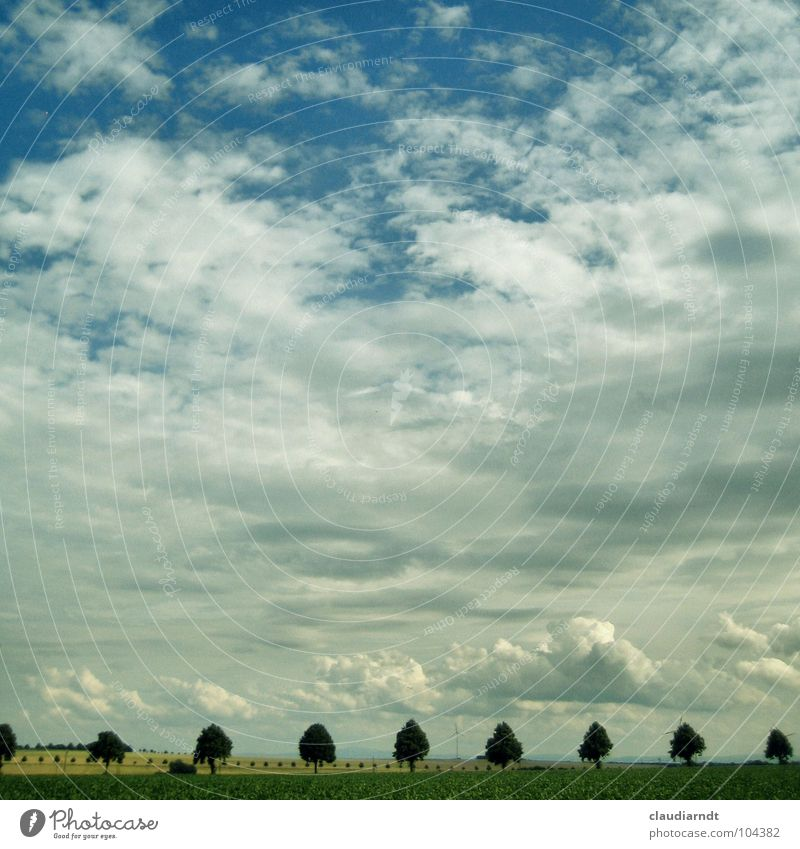 farsightedness Avenue Tree Row of trees Horizon Clouds Field Agriculture Symmetry Accuracy Smoothness Calm Vantage point Turnaround Seasons Summer Plain Sky