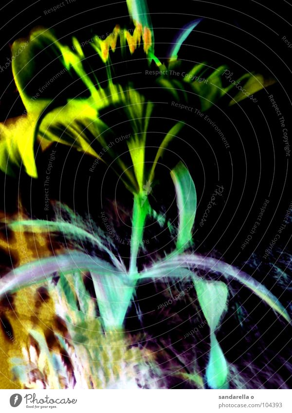 Flower Green Blue Colour Blossom Surrealism Digital Lily Digital photography Blossom leave Negative