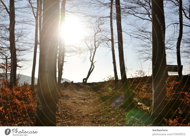 Weather | good prospects Nature Landscape Elements Sky Sun Spring Climate Beautiful weather Tree Bushes Forest Hill Swabian Jura Bench Illuminate Bright Wild