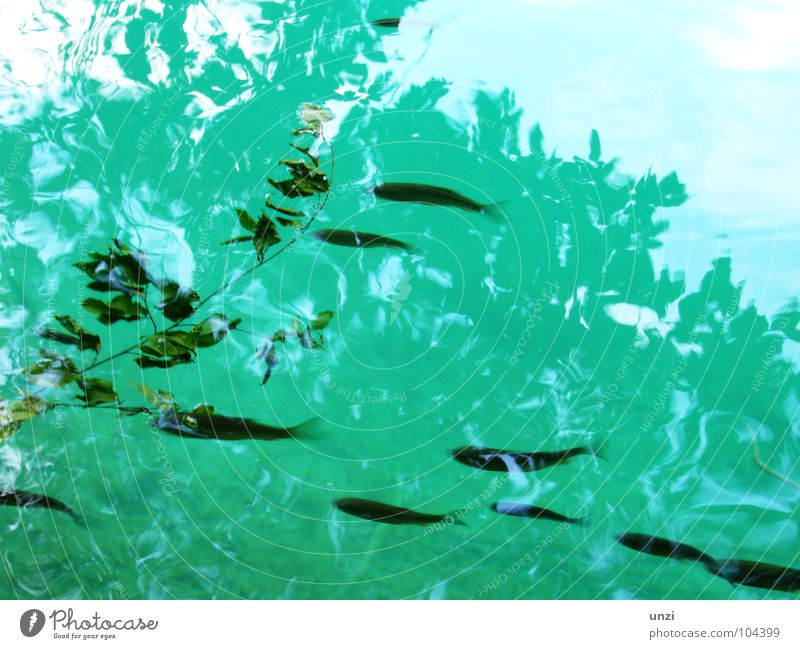 Nature Green Blue Calm Leaf Loneliness Animal Grass Bright Fish Electricity Clean Pure Clarity Turquoise Deep