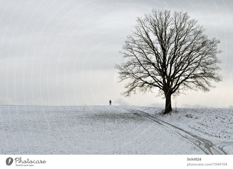 Human being Nature White Tree Relaxation Loneliness Landscape Winter Cold Snow Gray Horizon Hiking Trip Elements Footpath