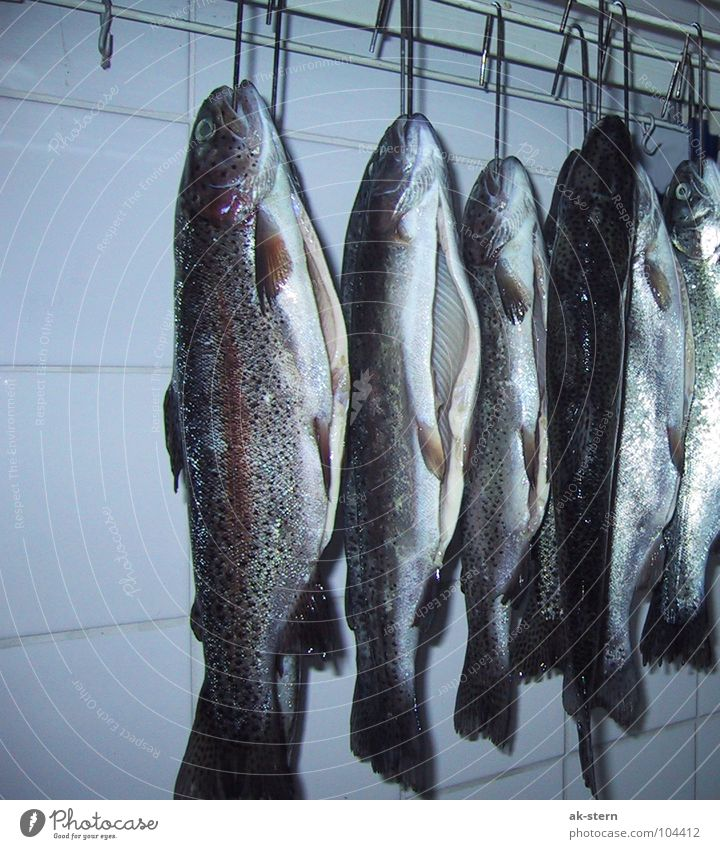 trout Rainbow trout Checkmark 6 Gill Hang Cooking Delicious Fishing (Angle) Animal Meat Conserve Fresh Slaughterhouse Corpse Cold Sliced Silent