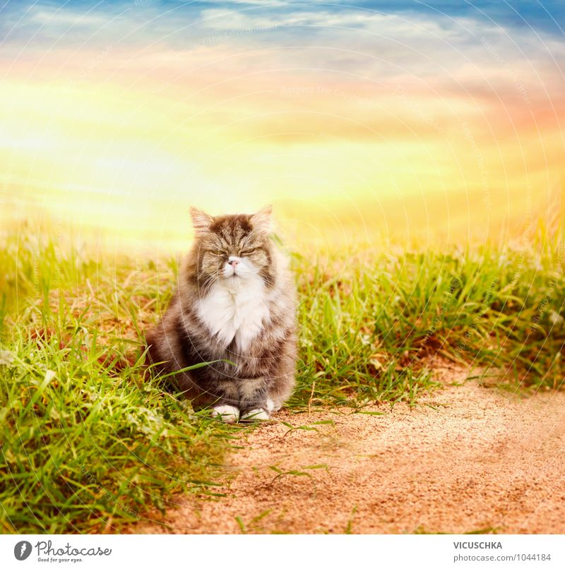Cat Sky Nature Summer Clouds Animal Autumn Meadow Spring Style Think Garden Sand Horizon Lifestyle Park